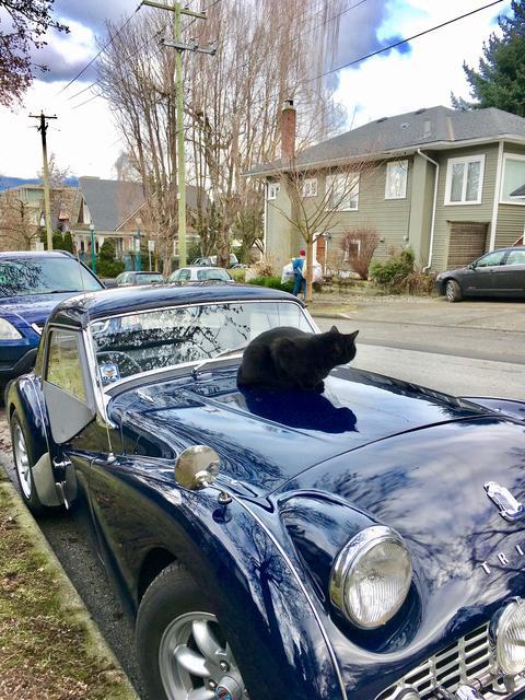 Black Cat on Terry 2 (1).jpg